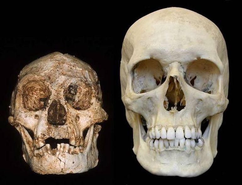 Homo_Floresiensis_Real_Hobbits_Accompanied_Humans_2