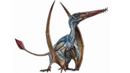 new-pterosaur-species-patagonia-argentina_1