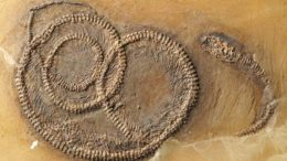 48-million-year-fossil-snake-lizard-bug_1