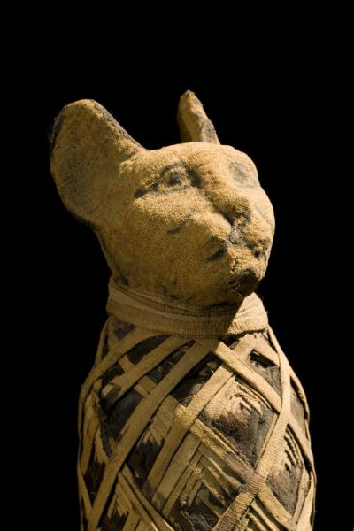ancient-egyptian-viking-cats_3