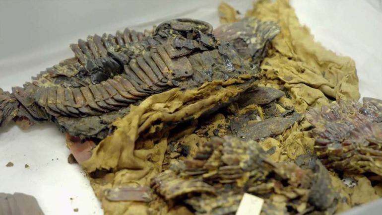 The Curse Of King Tuts Tomb Torrent: The Mysterious Case Of Tutankhamun's Warrior Armor
