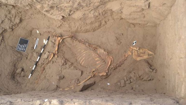 ancient-horse-burial-nubian-tombos_1